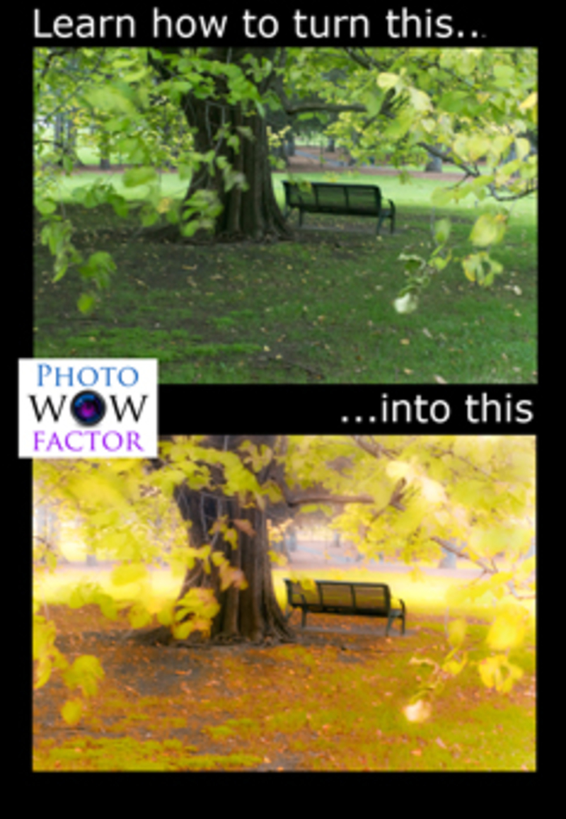 Before and After Foggy Autumn Scene